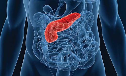 Поджелудочную железу, которая принимает участие в белковом, жировом, углеводном обмене, нужно периодически очищать, чтобы выводить из нее шлаки