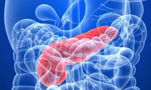В течение жизни размер железы постепенно увеличивается. К 18 годам железа обычно практически достигает стандартных параметров, рост затормаживается